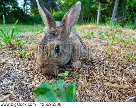 Close-up Of A Cute Little Rabbit Wishing In The Grass In Summer. Cute Pet