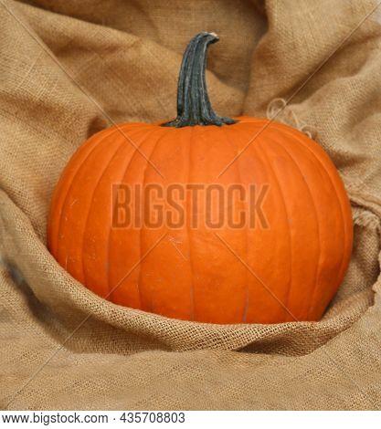 Pumpkin. Halloween. Thanksgiving. Pumpkin on a background of burlap. Halloween pumpkin. Thanksgiving Pumpkin.