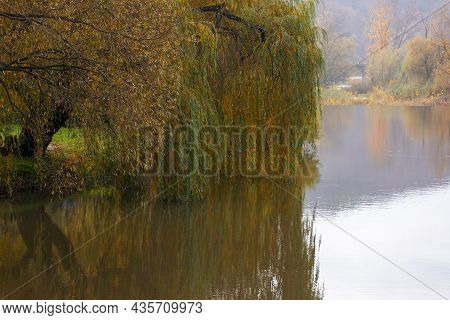 Willow Tree On The River Bank. Cloudy Autumn Day In Mountains. Beautiful Countryside Outdoors. Refle