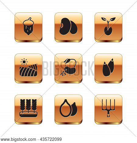 Set Acorn, Oak Nut, Seed, Wheat, Pumpkin Seeds, Sprout, Agriculture Wheat Field, Garden Pitchfork An