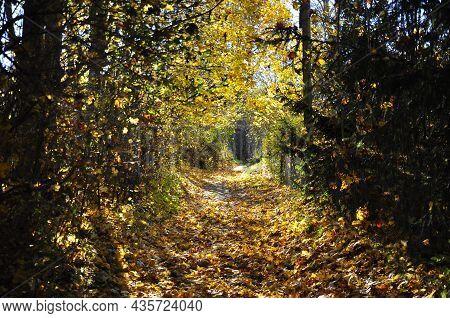 Pathway Through The Autumn Forest. Autumn Period.