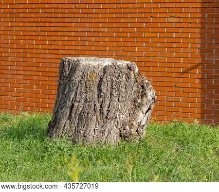 One Old Dried Tree Trunk Cutted Stump Behind House