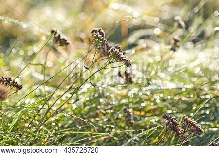 Autumn meadow with dry flowers and dew drops on grass. Copy space