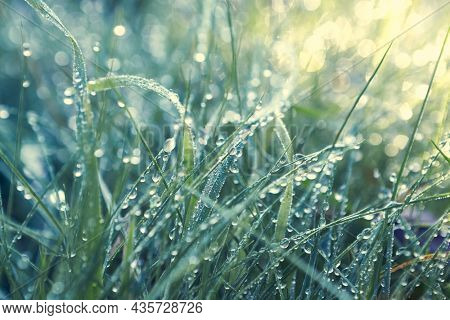 Morning dew drops on green grass. Close-up. Nature background