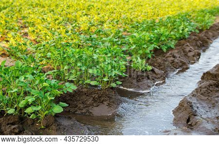 Irrigation The Potato Plantation. Providing Farms And Agro-industry With Water Resources. European F