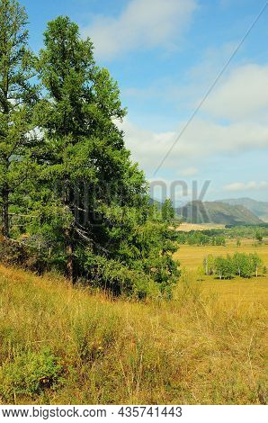 A Tall Pine Tree On A Hillside Overlooking A Picturesque Valley On A Sunny Summer Day.