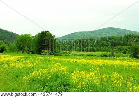 A Small Meadow With Wild Yellow Flowers At The Edge Of The Forest At The Foot Of A High Mountain.