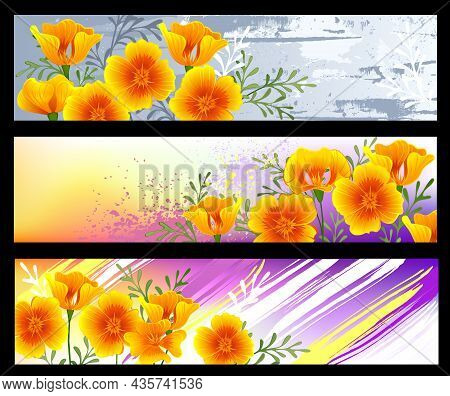 Profile Header Collection With Vibrant, Orange, Blooming, California Poppy On Scenic, Textured Backg