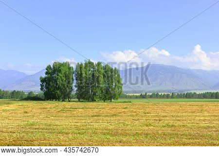 Mowing On A Plain At The Foot Of Green Mountains Under A Blue Sky. Siberia, Russia