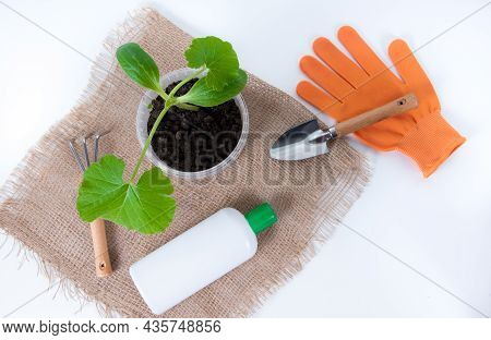 Fertilization Squash Seedlings. Bottles With Agent Against Plant Diseases On White Background. Treat