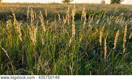 Brown Grass Flowers And Sun, Brown Grass Flower Field With Nature Brown Background