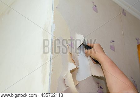 Adult Woman Removes Old Wallpaper From The Walls. Hands With A Red Manicure. Dismantling Wallpaper W