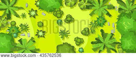 Hilly Lawn In The Forest. View From Above. Rainforest. Countryside Rural Landscape. Green Foliage Of