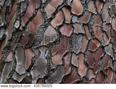 Maritime Pine, Pinus Pinaster Trunk Symbol. Texture Made Of Maritime Pine Tree Bark. Beautiful Marit