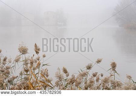 Riverside Forest Landscape Of The Duero River In A Mysterious Foggy Day In Zamora, Spain