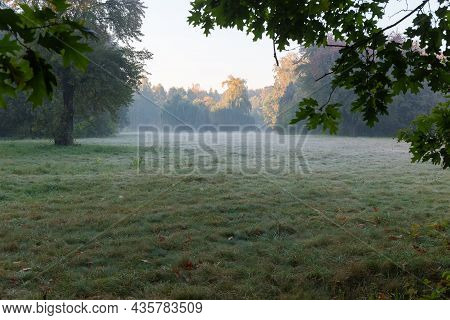 Large Glade Overgrown With Grass Among The Old Trees, With Oak Branches Hanging On A Foreground In P