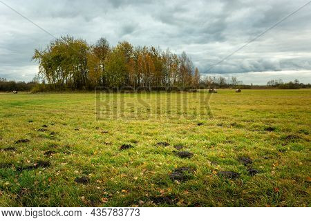 Meadow And Grove With Trees On An Autumn Day