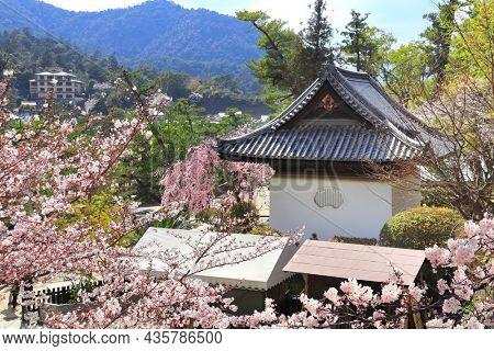 Pavilion in Itsukushima Shrine and sakura blossom branches. Sakura blossom season in Miyajima island, Hiroshima, Japan. UNESCO world heritage site