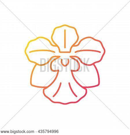 Vanda Miss Joaquim Gradient Linear Vector Icon. Singaporean National Flower. Plant Hybrid. Singapore