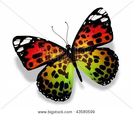 Orange Yellow Green Butterfly, Isolated On White Background