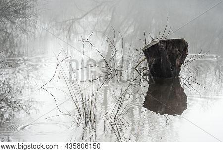 Autumnal Misty Wooded Wetland And Sunken Tree Stump