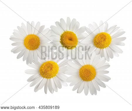 Daisies Group Isolated On A White Background