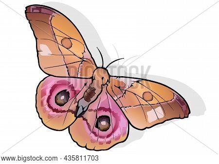 Madagascar Bullseye - Beautiful Colorful Butterfly Antherina Suraka Isolated On White Background, Ve