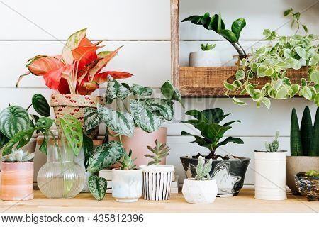 Indoor potted plants arrangement for home decor