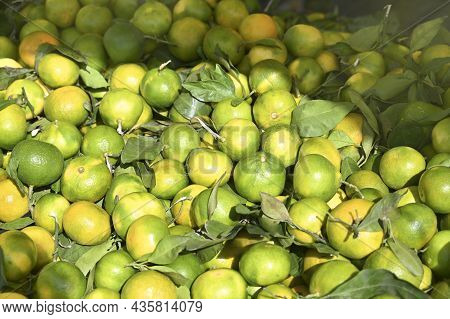 A Lot Of Ripe And Green Citrus Fruits With Green Leaves Lie On Top Of Each Other