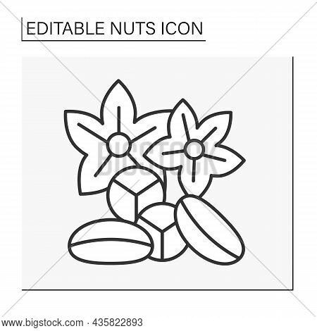 Kola Nuts Line Icon. Nuts Contain Caffeine, An Additional Flavoring Agent In Beverages.nuts Concept.