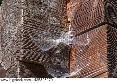 Large Spider Web On A Wooden Wall.