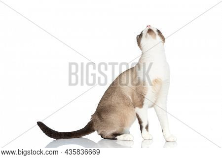 side view of cute little kitty looking up and waiting for food while sitting isolated on white background in studio