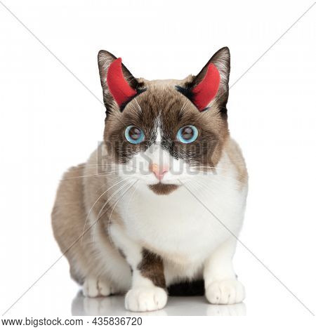 cute little metis kitty wearing devil horns and sitting isolated on white background in studio