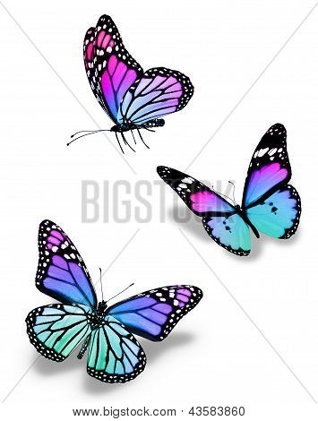 Three Violet Blue Butterflies, Isolated On White