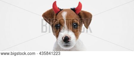 landscape of a sweet jack russell terrier dog wearing devil horns against gray background