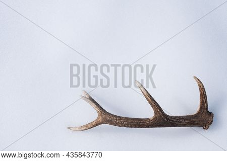 Deer Antlers Isolated On White Snow With Copy Space