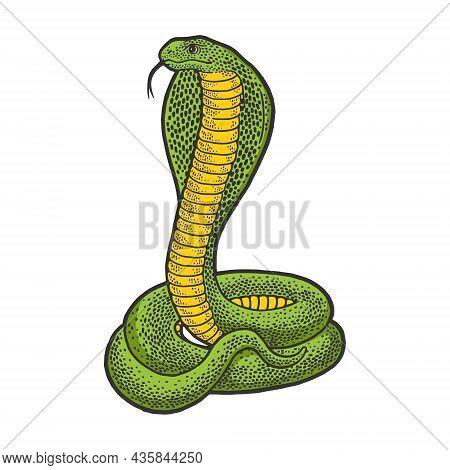 Cobra Snake Animal Color Sketch Engraving Vector Illustration. T-shirt Apparel Print Design. Scratch
