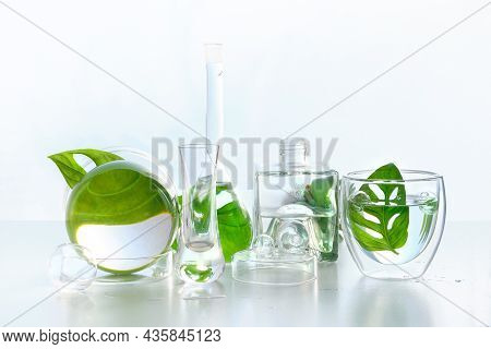 Natural Laboratory. Abstract Floral Arrangement With Exotic Monstera Leaves In Transparent Glass Vas