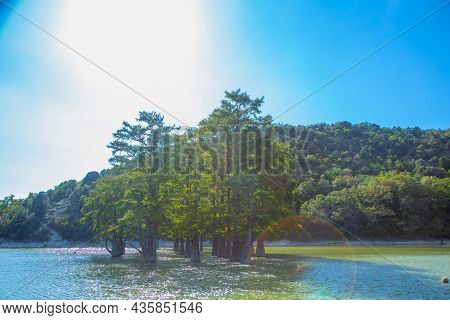 Sukko Cypress Lake With Cypress Trees Growing In The Water, Surrounded By Forests And Mountains. Hig