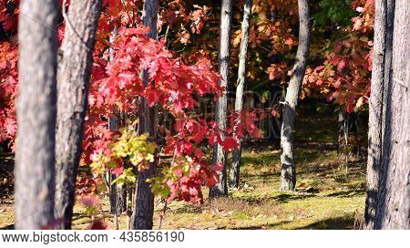 Beautiful Autumn Forest Landscape Orange Foliage And Trees In The Forest.