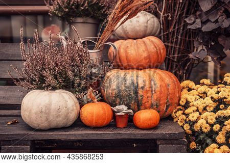 Pumpkin Composition, Happy Thanksgiving. Stylish Pumpkins, Purple And Yellow Flowers, Heather On A W