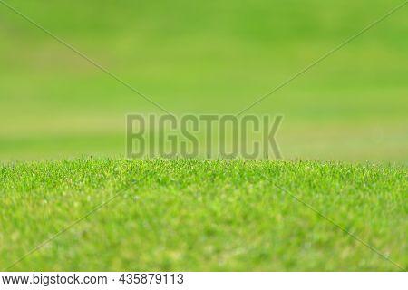Close Up Green Fresh Grass Texture Background