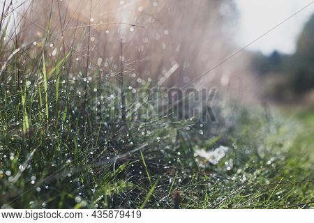 Natural Strong Blurry Background Of Green Grass Blades Close Up. Fresh Grass Meadow In Sunny Morning