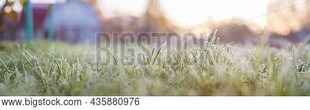 Landscape Panorama Frozen Grass Branch In Winter. Banner Frame Of Froze Lush Green Grass With Ice Cr