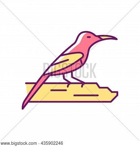 Crimson Sunbird Rgb Color Icon. Tropical Asian Bird. Singapore National Symbol. Resident Breeder. Ea