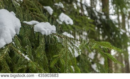 Winter Forest. Snow On The Branches Of Trees. Frosty Air In The Park Among The Trees. Cozy Walks In