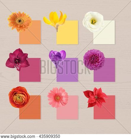 Multicolor Flowers And Cards Of Similar Shades On White Wooden Background, Collage. Montessori Metho