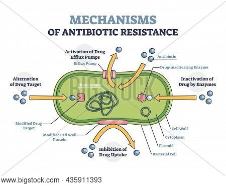 Mechanisms Of Antibiotic Resistance Outline Diagram, Illustrated Example. Alternation Of Drug Target