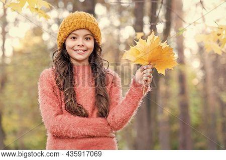 Teenage Girl Relax In Park. Fall Season Beauty. Enjoy Day In Forest. Kid Arranging Yellow Maple Leav