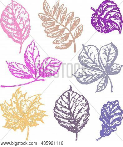 Vector Outline Drawings Of Set Autumn Leaves Various Deciduous Trees